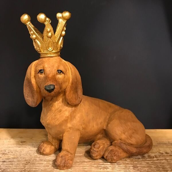 Dachshund, dog